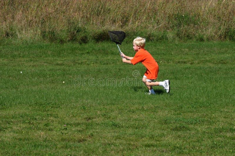 chłopcy złapać owadów zdjęcie stock