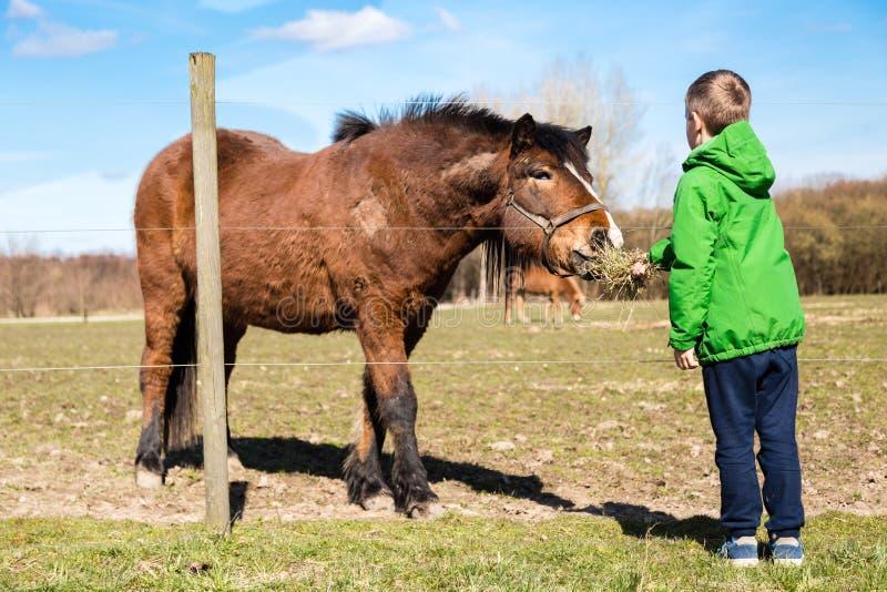 Chłopiec żywieniowy koń obrazy stock