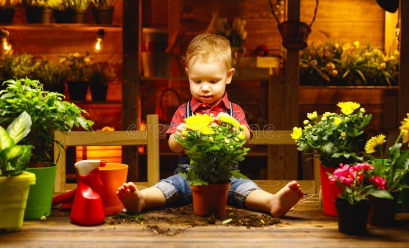 Chłopiec angażuje w ogrodnictwie r i przeszczepy kwitną zdjęcia royalty free