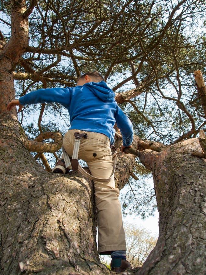 Chłopiec bawić się w drzewie zdjęcia royalty free