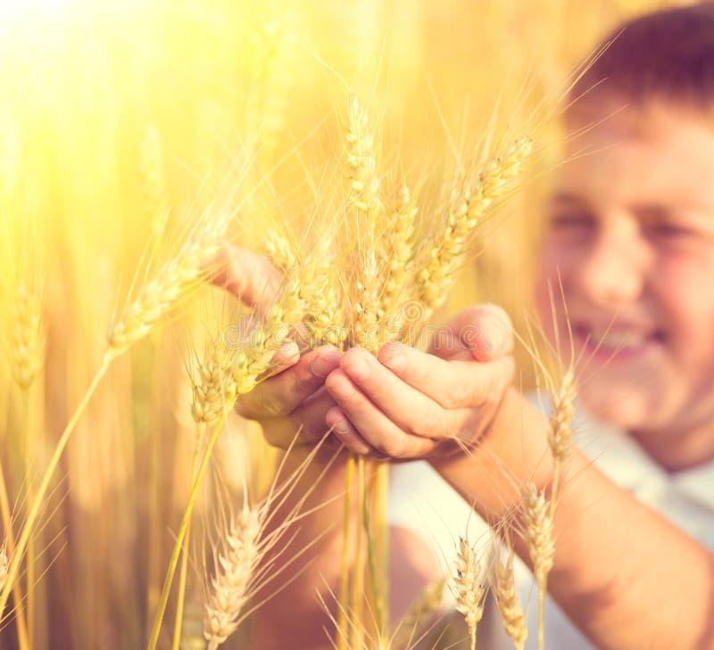 Chłopiec bierze pszenicznych ucho obrazy royalty free