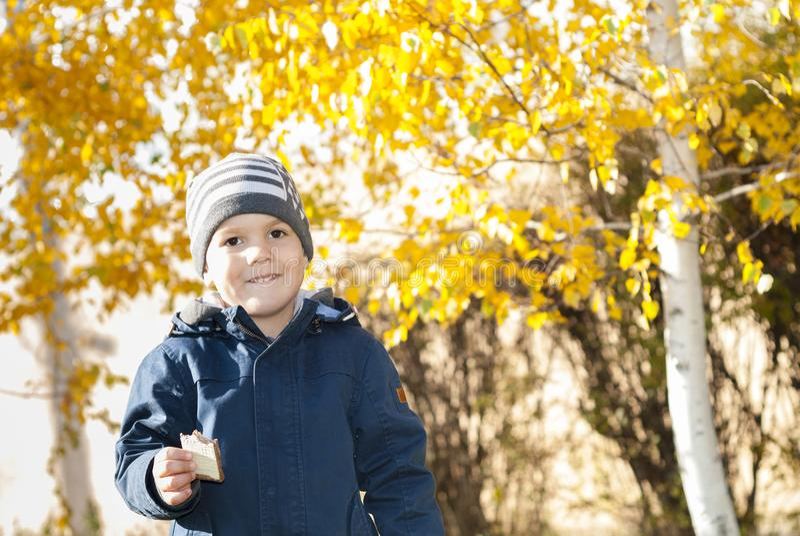 Chłopiec blisko brzozy obraz stock