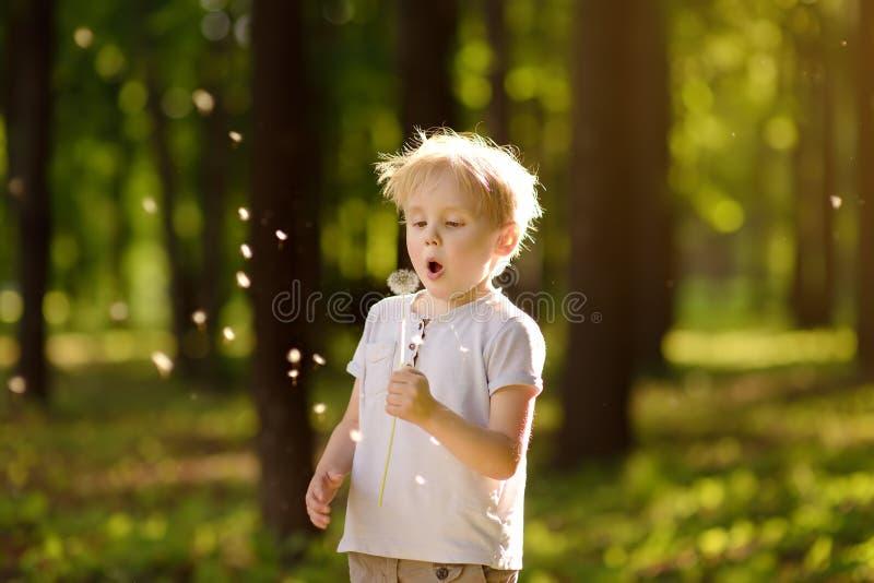 Chłopiec ciosy zestrzelają dandelion fluff na życzenie obraz royalty free