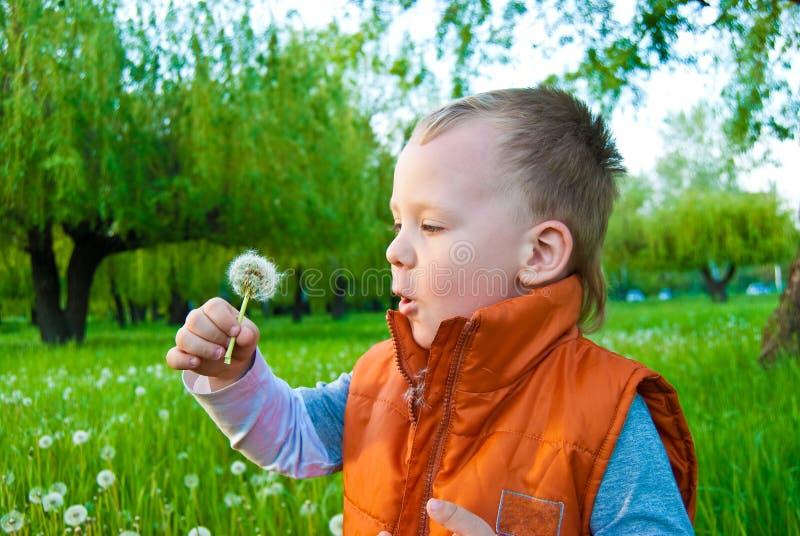chłopiec dandelion obraz stock