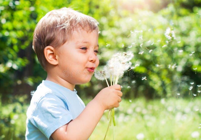 chłopiec dandelion obraz royalty free