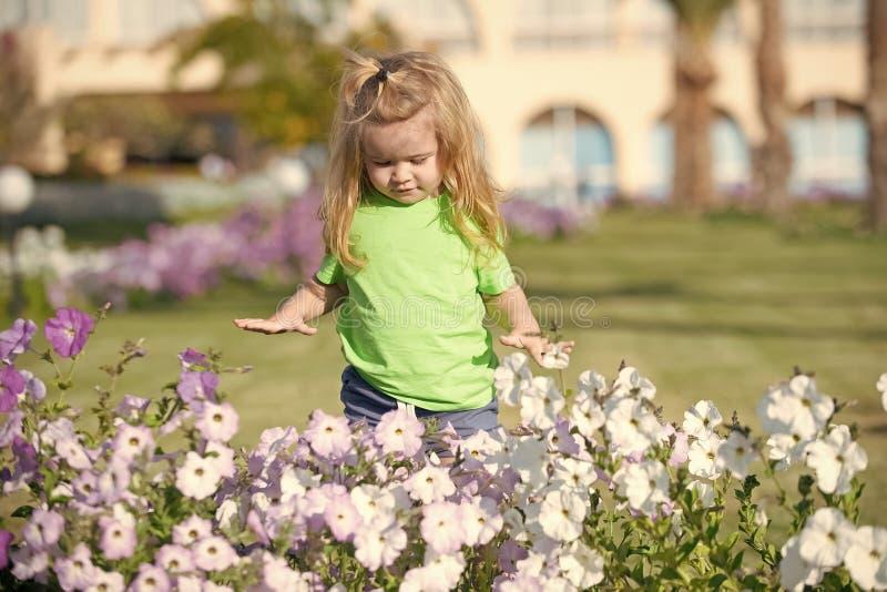 Chłopiec dziecko patrzeje flowerbed z petunią kwitnie obraz royalty free