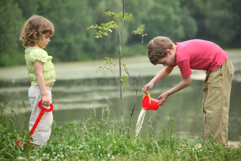 chłopiec dziewczyna nalewa rozsadowego drzewa fotografia royalty free
