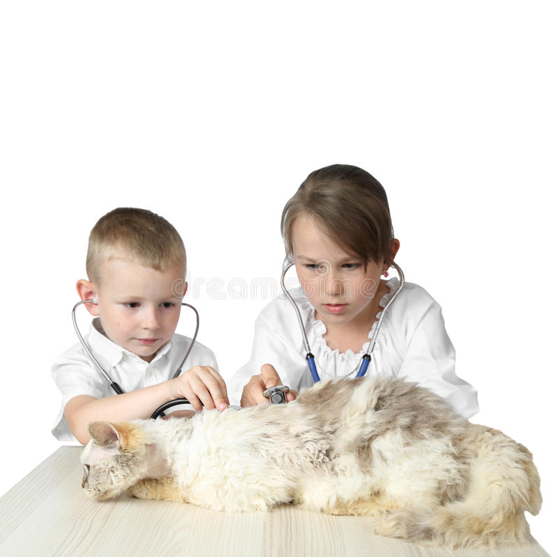 Chłopiec i dziewczyna bawić się w weterynarzach skupiamy się na kocie obraz royalty free
