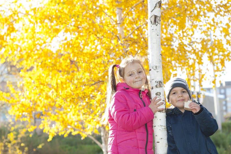 Chłopiec i dziewczyna blisko brzozy zdjęcia royalty free