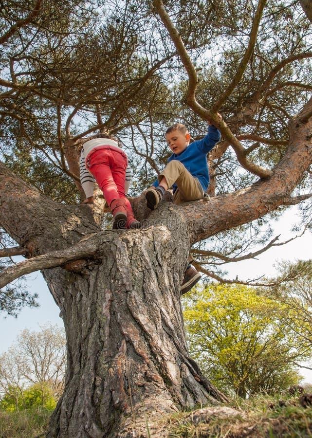 Chłopiec i dziewczyny pięcie w drzewie obraz stock