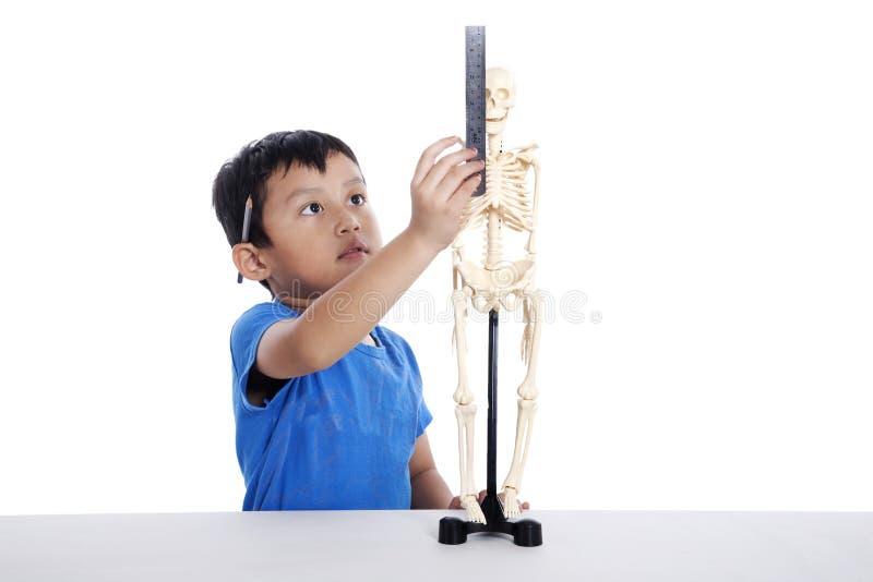 chłopiec istota ludzka mierzy czaszkę zdjęcia stock