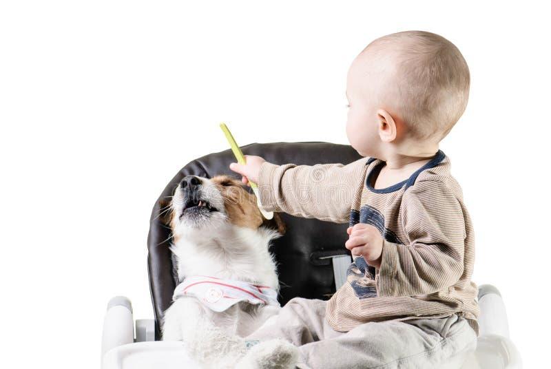 Chłopiec karmi jego psiego zwierzęcia domowego odmawianie jeść zdjęcia stock