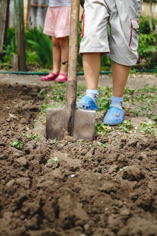 Chłopiec kopie jarzynowego ogród z dużą łopatą Pojęcie pomaga dorosli i praca od dzieciństwa zdjęcia royalty free