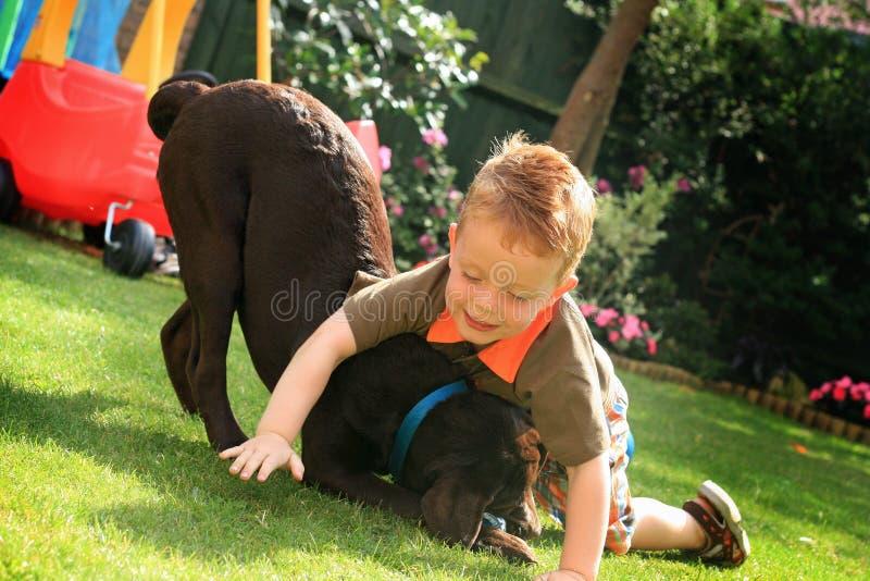 chłopiec labrador obraz royalty free