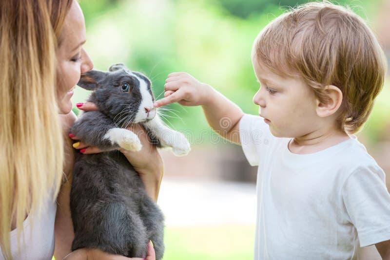 Chłopiec macania zwierzęcia domowego królika nos podczas gdy fotografia stock
