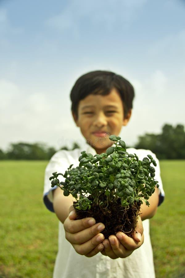 chłopiec mienia roślina obrazy stock