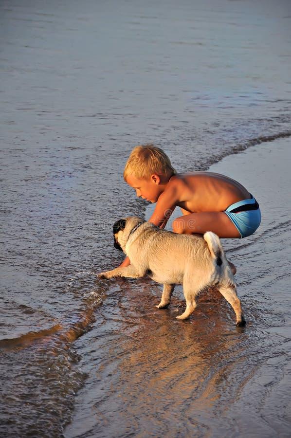 chłopiec mopsa szczeniak zdjęcie royalty free
