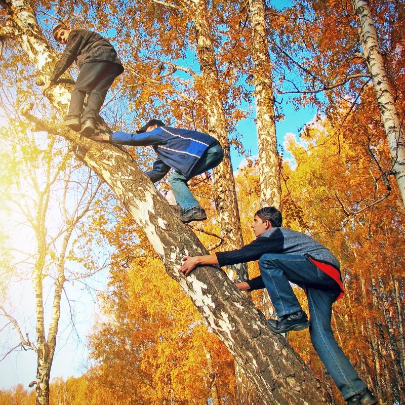 Chłopiec na drzewie obrazy royalty free