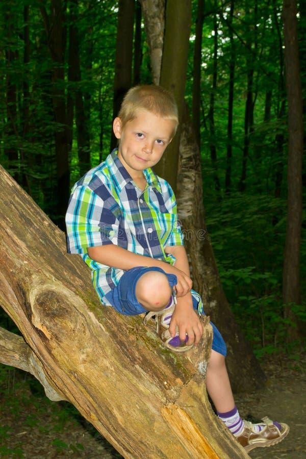 Chłopiec obsiadanie drzewem obrazy stock