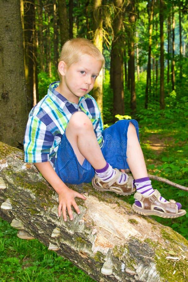 Chłopiec obsiadanie drzewem zdjęcie royalty free