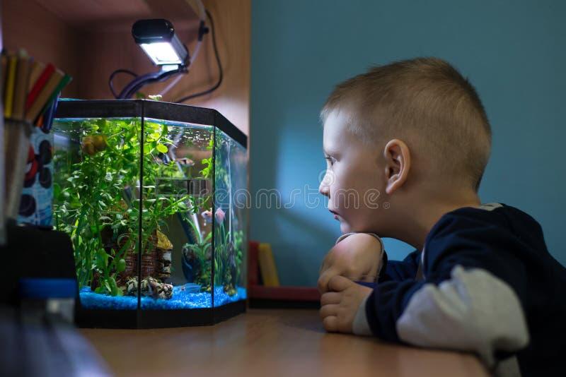 Chłopiec ogląda rybiego zbiornika w jego pokoju fotografia stock