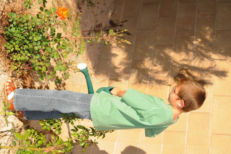 chłopiec ogrodowi podlewania potomstwa zdjęcie stock