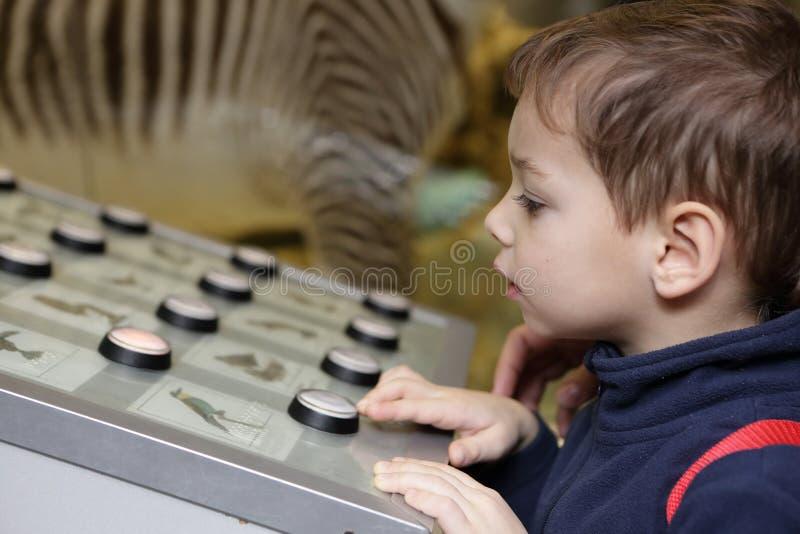 Chłopiec studiowania birdsong obrazy royalty free