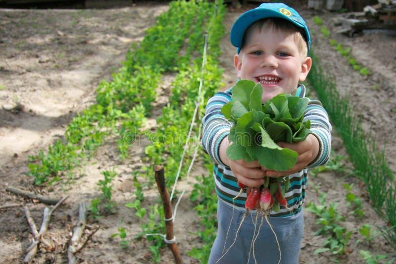 Chłopiec trzyma wiązkę rzodkwie zdjęcia royalty free