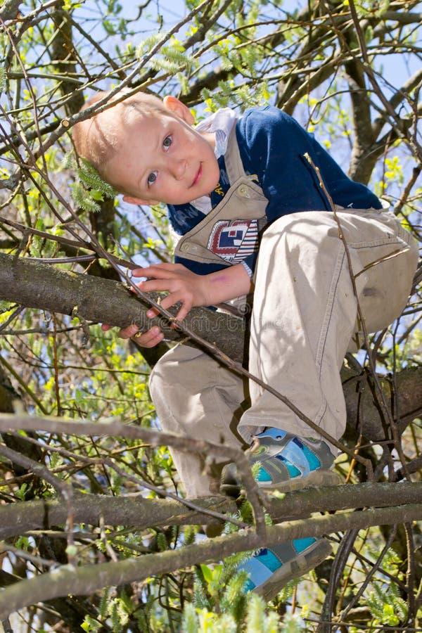 Chłopiec w drzewie obraz stock