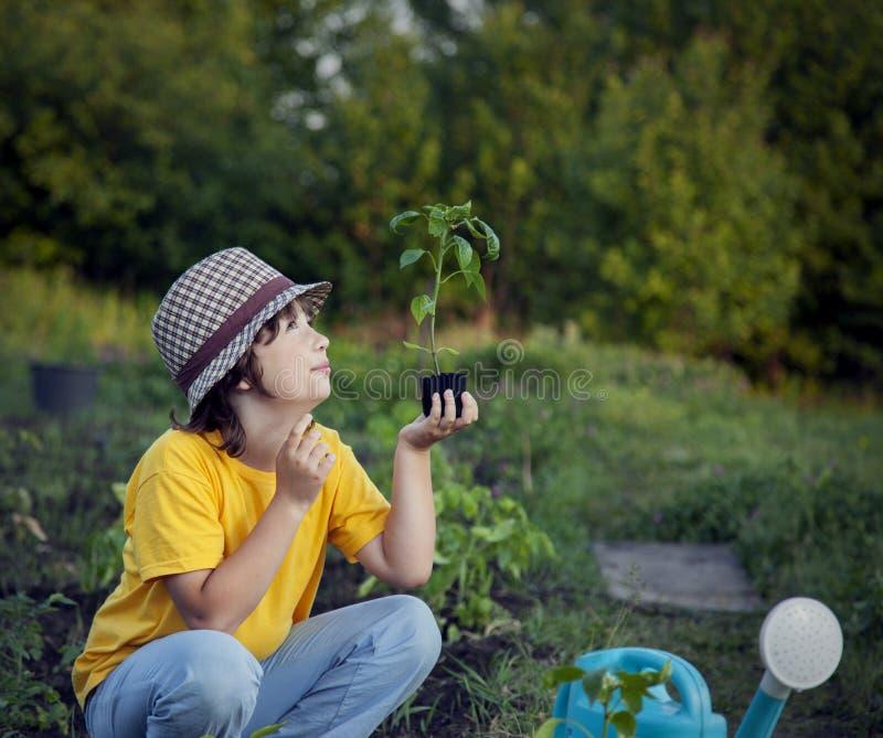 Chłopiec w ogródzie podziwia rośliny przed zasadzać Zielony Sprou zdjęcia stock
