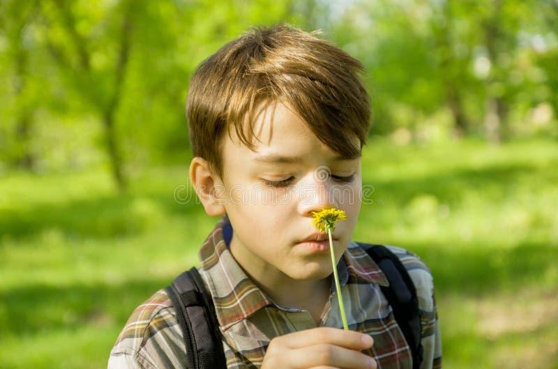 Chłopiec w Parkowym obwąchania dandelion kwiacie, zakończenie portret zdjęcie stock