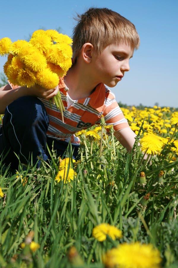 chłopiec wiązki dandelions zdjęcia royalty free