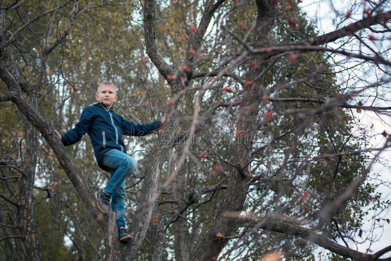 Ch?opiec w drzewie Jesieni drzewo z jagodami i latającymi liśćmi dziecka ` s gry obraz stock