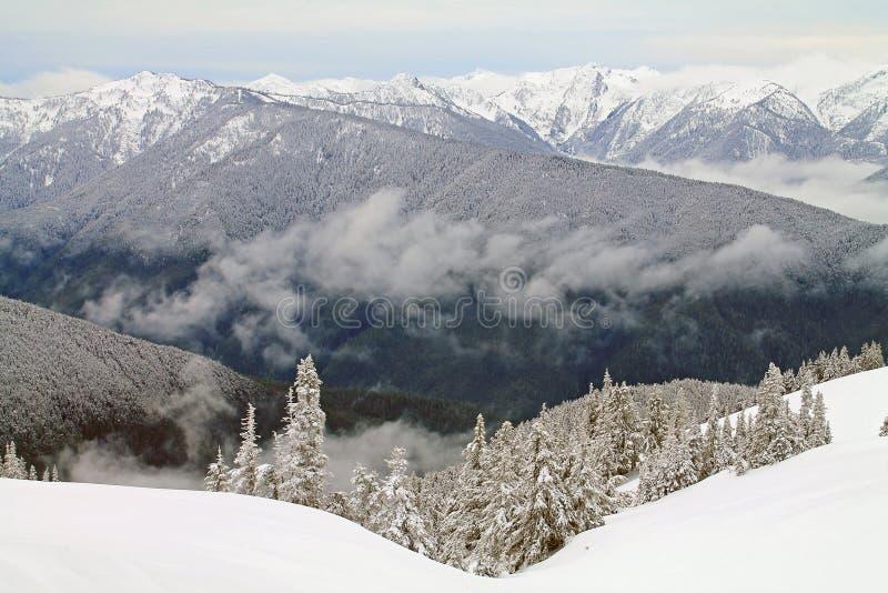 Chaîne de montagne couronnée de neige au delà d'un champ de Milou photographie stock libre de droits
