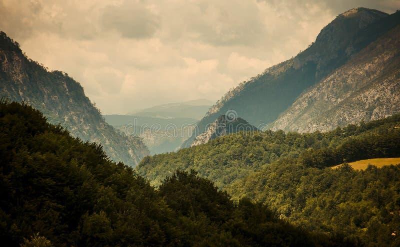 Chaîne de montagne et forêts de canyon de gorge de rivière Tara, Montenegr photographie stock