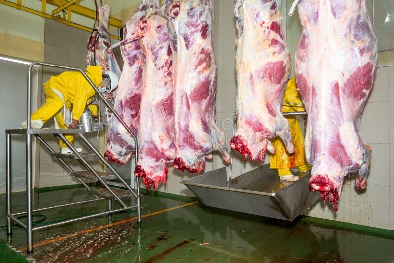 Chaîne de production d'abattoir de l'industrie alimentaire image libre de droits