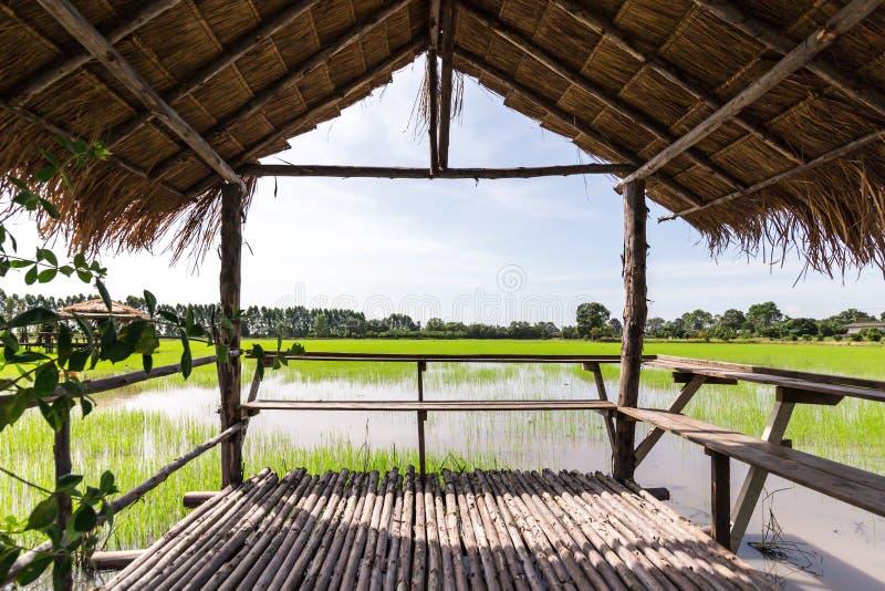 Chałupa w polu przy Tajlandia i niebem, żółtej zieleni ryż, trawa dach obraz royalty free