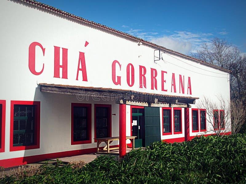 Cha Gorreana, piantagione di tè e fabbrica fotografia stock