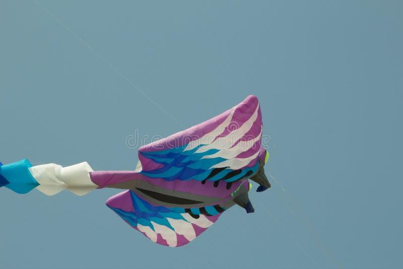 Cha-suis international, le festival de cerf-volant dans Prachuap Khiri Khan Provi images libres de droits