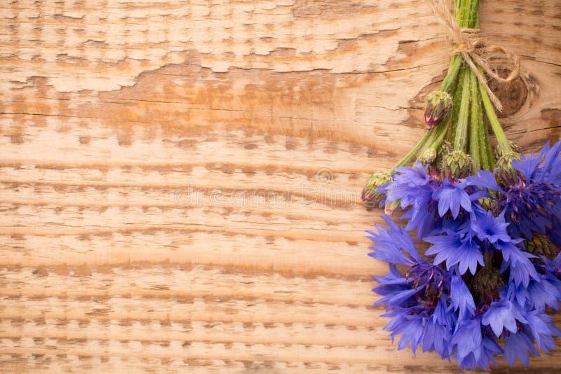 Download Chabrowy zdjęcie stock. Obraz złożonej z roślina, objurgate - 41951914