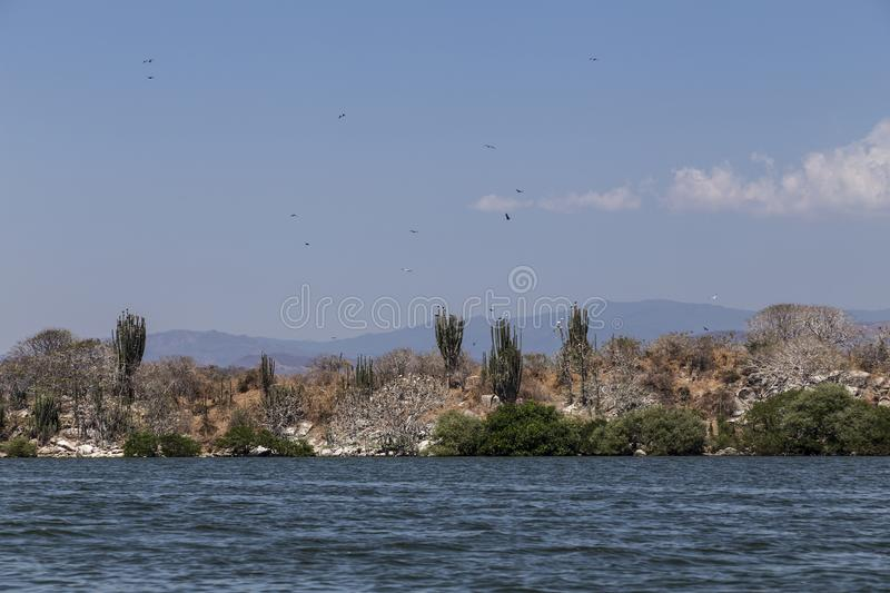Chacahua Lagoon in Oaxaca, Mexico. Where the freshwater delta meets the pacific ocean where many water birds have found a breeding ground and resting place royalty free stock photo