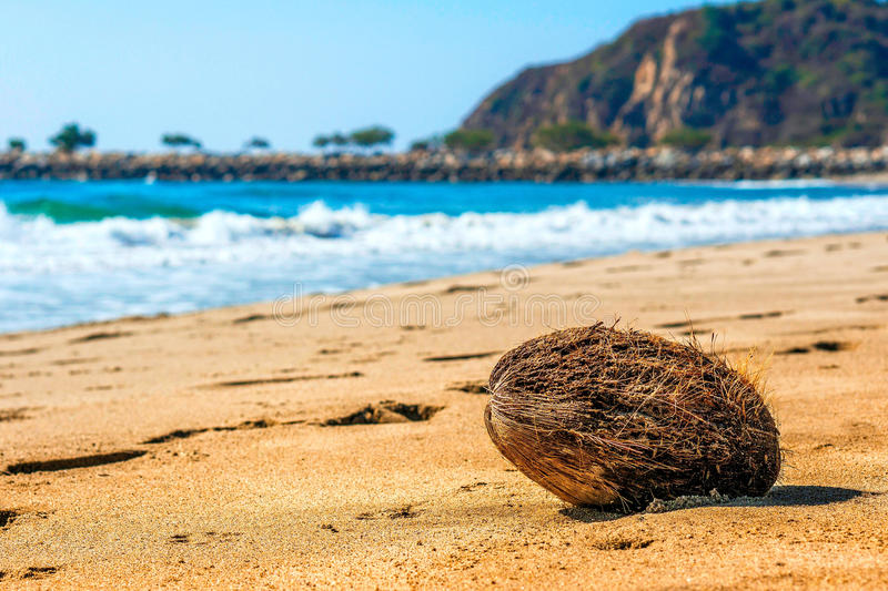 Chacahua. A random coconut on the burning hot sands of Chacahua in Oaxaca, Mexico royalty free stock photos