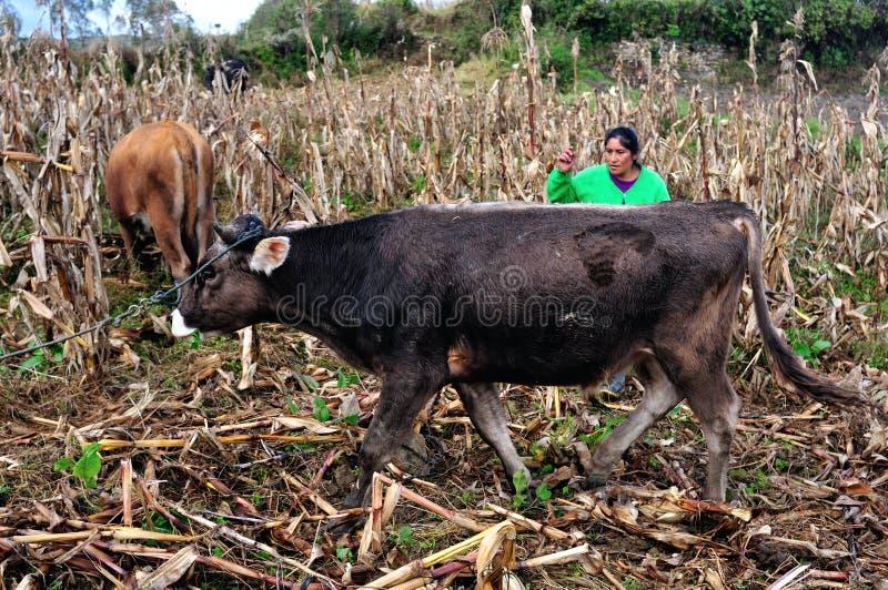 Chachapoyas - Περού στοκ φωτογραφίες με δικαίωμα ελεύθερης χρήσης