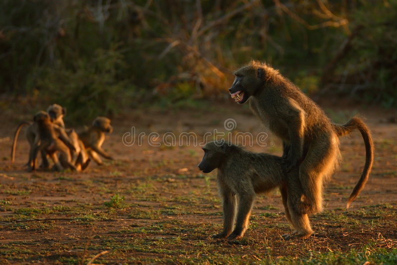 Animal Sex Baby Stock Images - Download 126 Royalty Free Photos