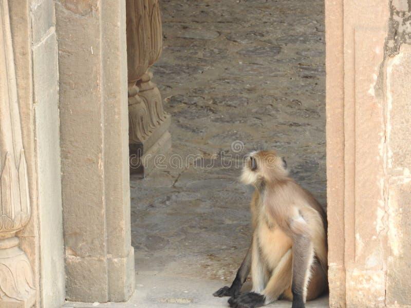 Chacun des deux sont dans le stepwell c?l?bre Chand Baori bien dans le village d'Abhaneri, R?jasth?n, Inde image stock