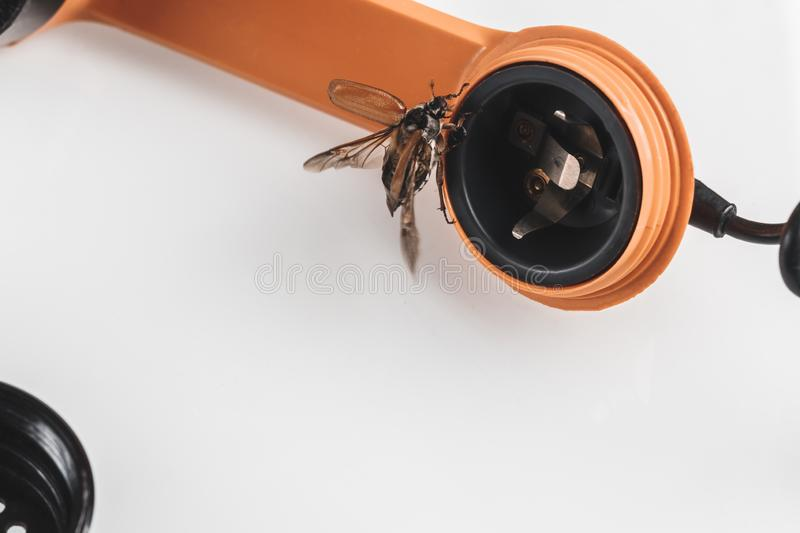 Chafer. retro phone. He gets out of the speaker. phone listening concept. Tube buttons disk wiretapping recording shadowing bug beetle macro large nature stock photo