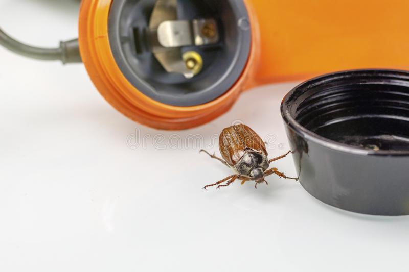 Chafer. retro phone. He gets out of the speaker. phone listening concept. Tube buttons disk wiretapping recording shadowing bug beetle macro large nature stock photography