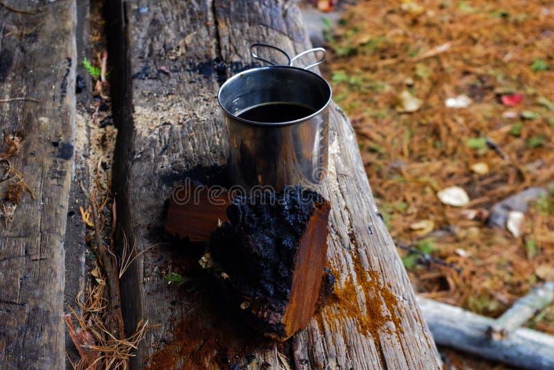 Chaga蘑菇和茶在阿迪朗达克原野 免版税库存图片