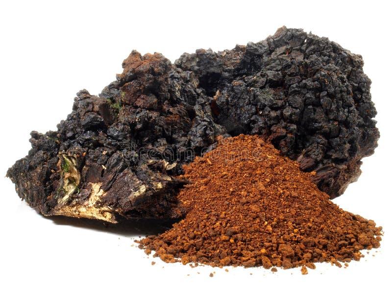Chagapaddestoel - Gezonde Voeding stock afbeelding