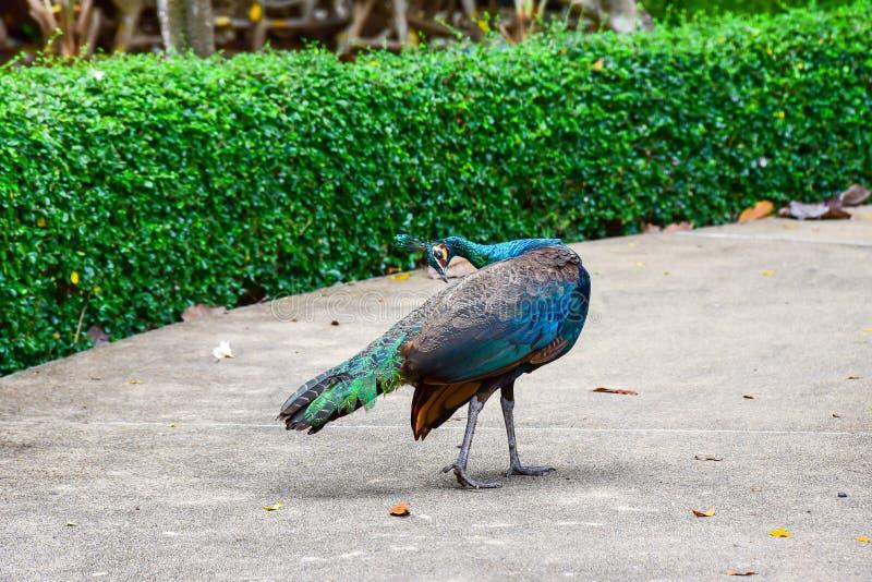 Chai Nat泰国12月26日2019看见在Chai Nat飞禽公园的鸟是chainat省地方  鸟笼是最大的  库存图片